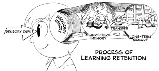 procés de creació de la memòria a llarg termini